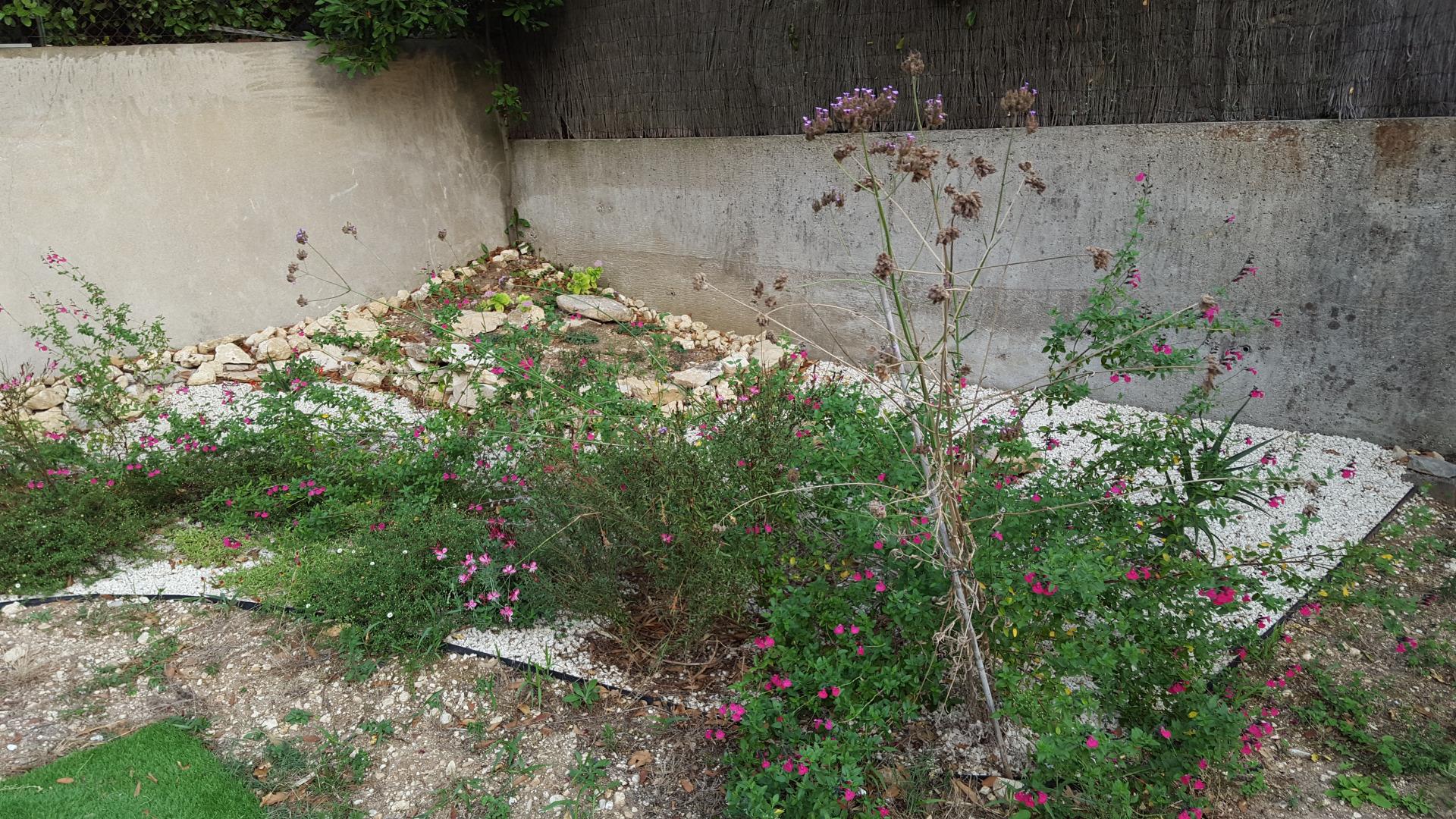 Cr ation d 39 un jardin sec un beau jardin avec peu d 39 entretien for Entretien jardin avignon